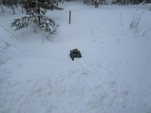 radiostyrd pansarvagn fast i snön med larvband
